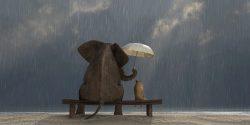Comment la gentillesse peut guérir le corps – Dr David Hamilton