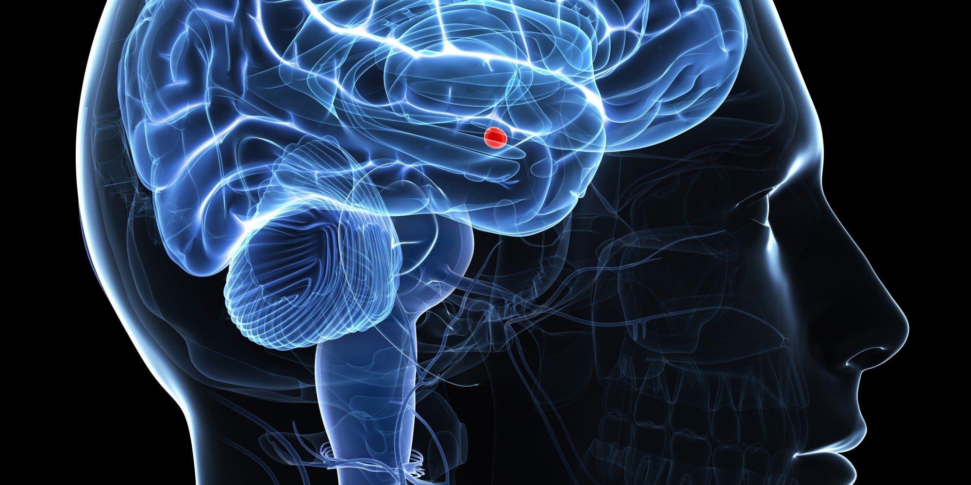 L'amygdale, la peur et la psychologie énergétique : propos au sujet du blog d'un neuroscientifique