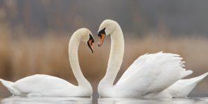 Une divine histoire d'amour