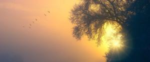 L'IFS – Internal Family System – un véritable changement pour la médecine, la psychiatrie et la spiritualité